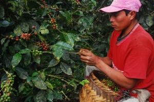 coffee farmer in Nacaragua